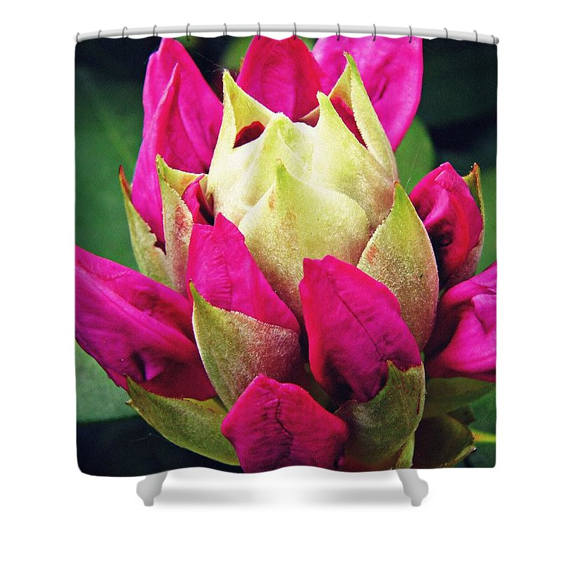 Rhododendron Shower Curtain featuring the photograph Rhododendron Velvet  by Sarah Loft