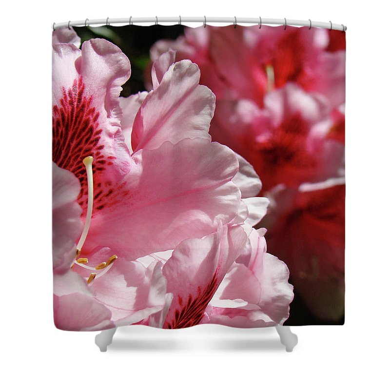 Rhodie Shower Curtain featuring the photograph Rhododendrons Art Prints Floral Pink Rhodies Canvas Baslee Troutman by Baslee Troutman