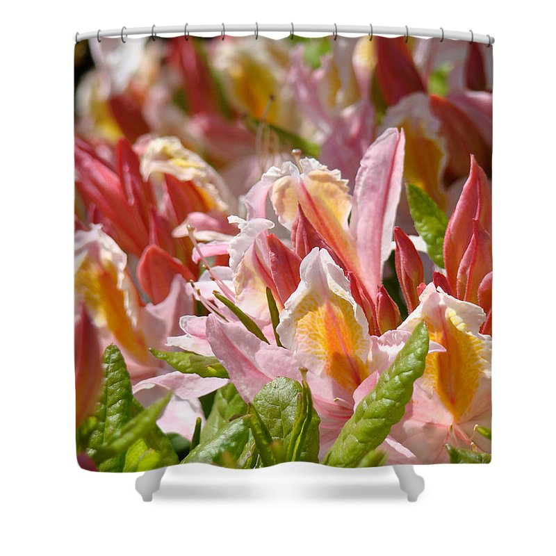 Rhodie Shower Curtain featuring the photograph Rhododendrons Floral Art Prints Canvas Pink Orange Rhodies Baslee Troutman by Baslee Troutman