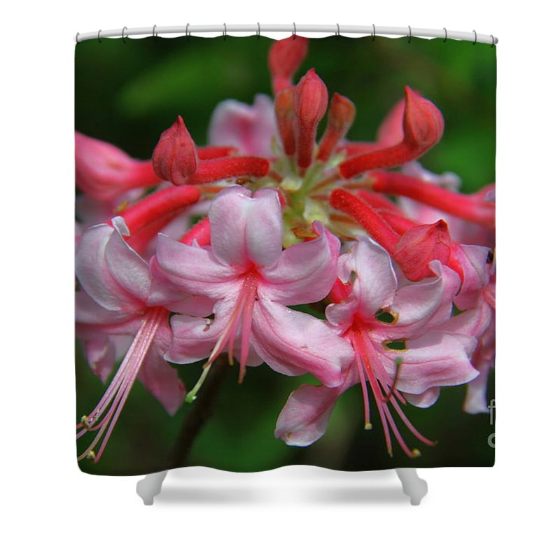 Wild Azalea Shower Curtain featuring the photograph Rich Pink Blossoms by Barbara Bowen