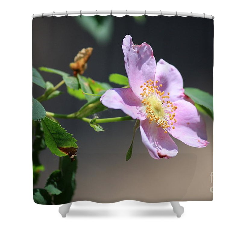 Floral Shower Curtain featuring the photograph Rimrock Rose by Carol Groenen