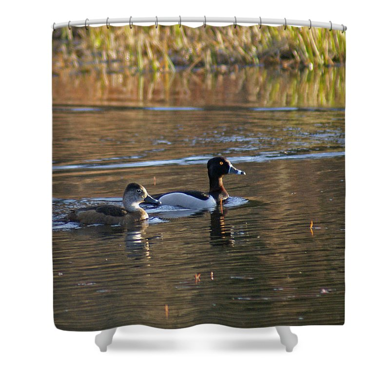 Duck Shower Curtain featuring the photograph Ring Necked Duck by Heather Coen