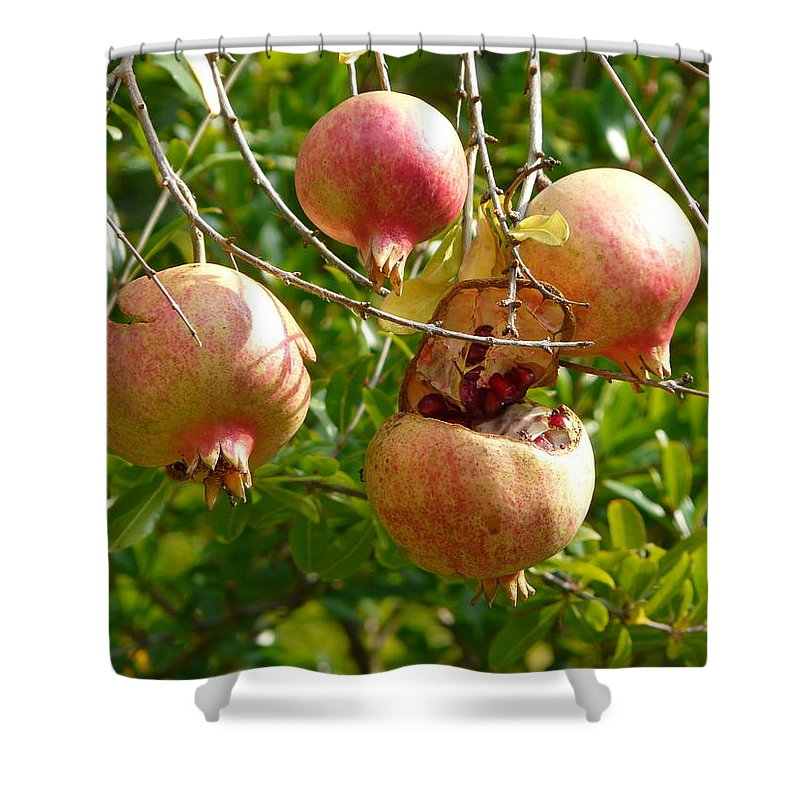 Ripe Shower Curtain featuring the photograph Ripe Pomegranates by Valerie Ornstein