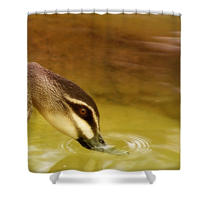 Animals Shower Curtain featuring the photograph Ripples by Holly Kempe