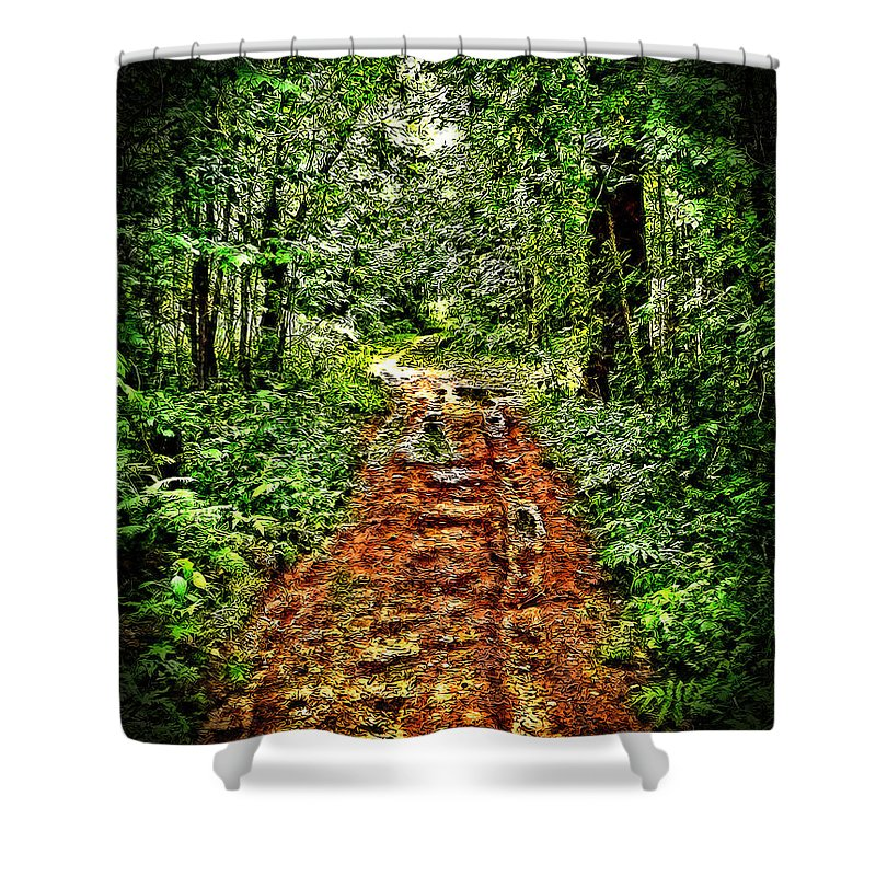 Forest Road Shower Curtain featuring the photograph Road In The Wilderness by Mark Sellers