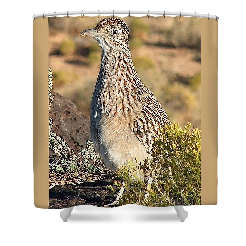 Roadrunner Shower Curtain featuring the photograph Roadrunnner At The Petroglyphs by Tim McCarthy