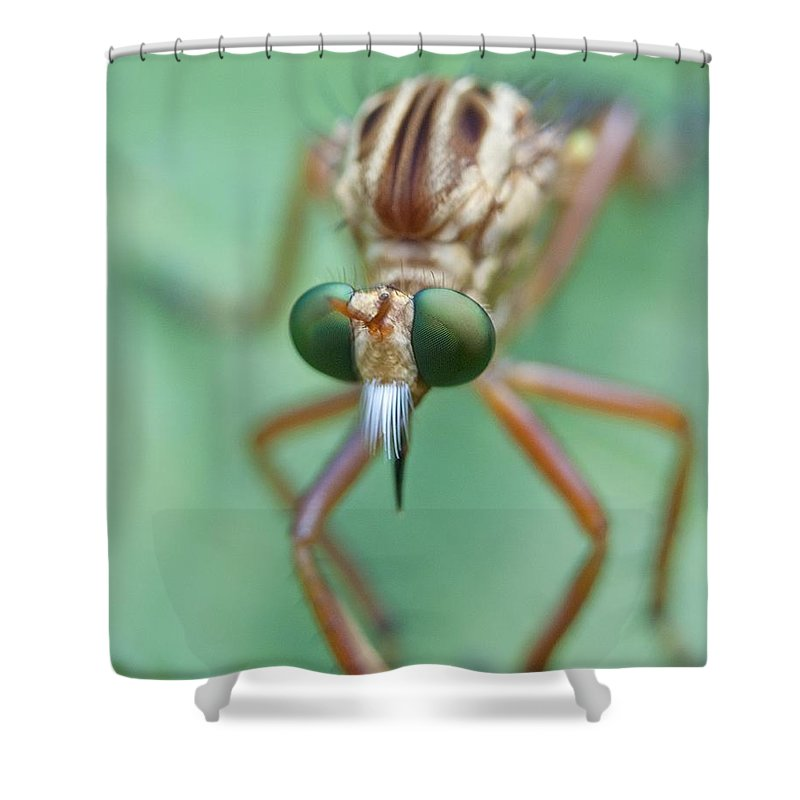 Fly Shower Curtain featuring the photograph Robber Fly by Kenneth Albin