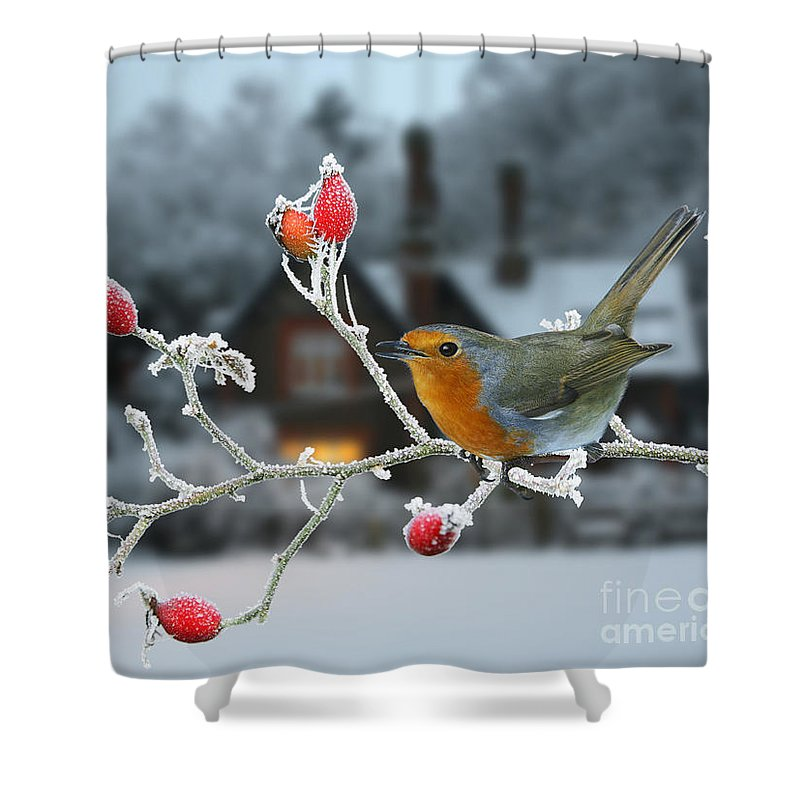European Robin Shower Curtain featuring the photograph Robin And Rose Hips by Warren Photographic