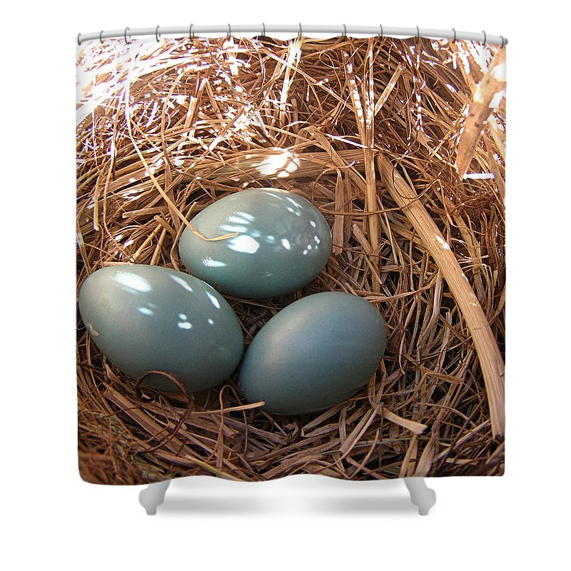 Robin Shower Curtain featuring the photograph Robin Eggs by Angie Rea