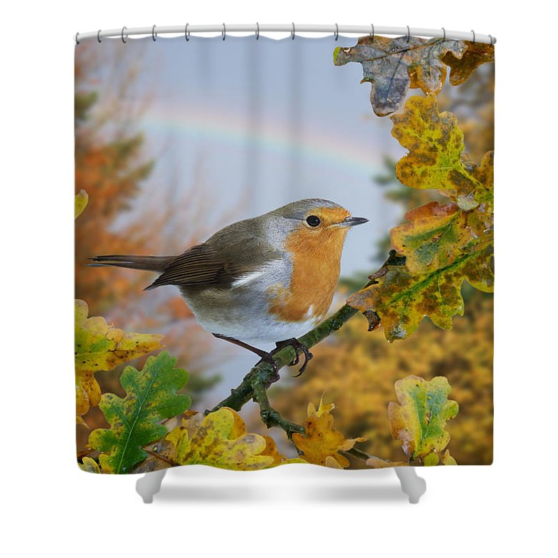 European Robin Shower Curtain featuring the photograph Robin On Oak Branch by Warren Photographic