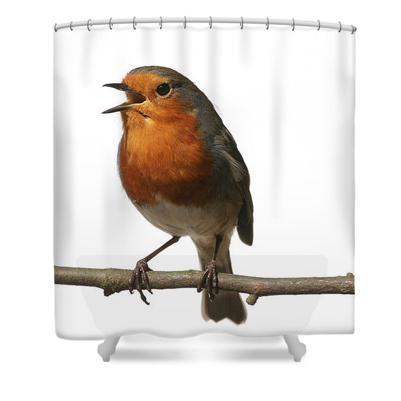 European Robin Shower Curtain featuring the photograph Robin Singing On Branch by Warren Photographic