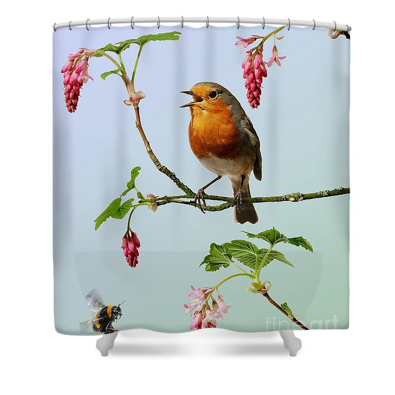 Flowering Currant Shower Curtain featuring the photograph Robin Singing On Flowering Currant by Warren Photographic