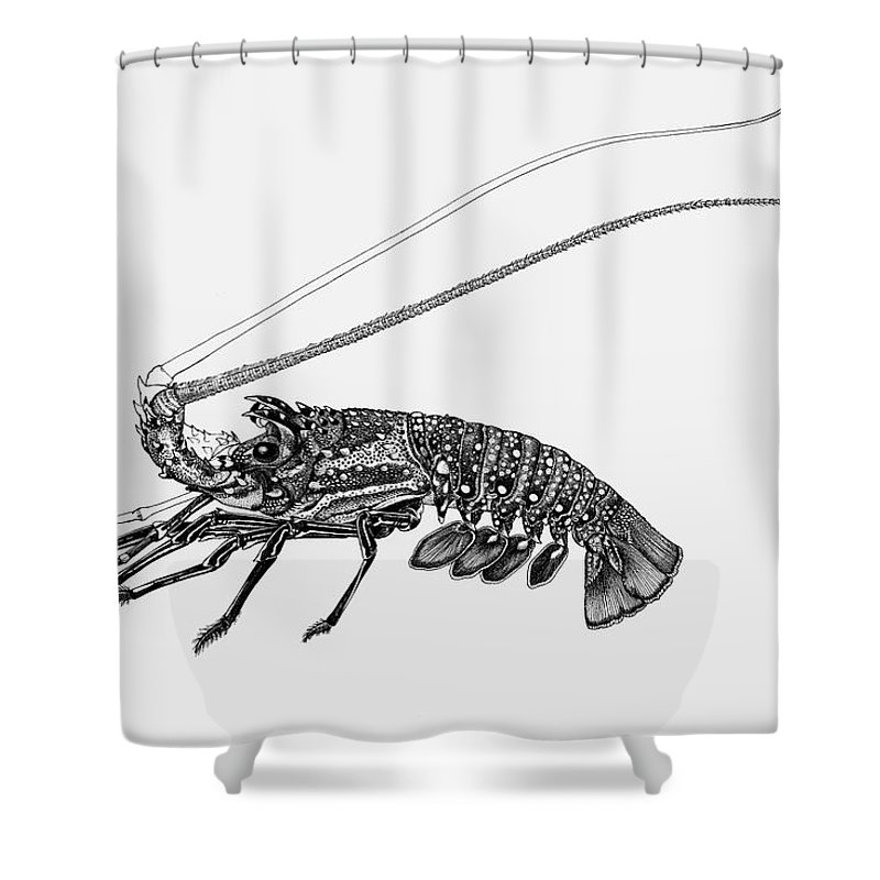 Blue Spot Rock Lobster Shower Curtain Featuring The Drawing By Judith Kunzle