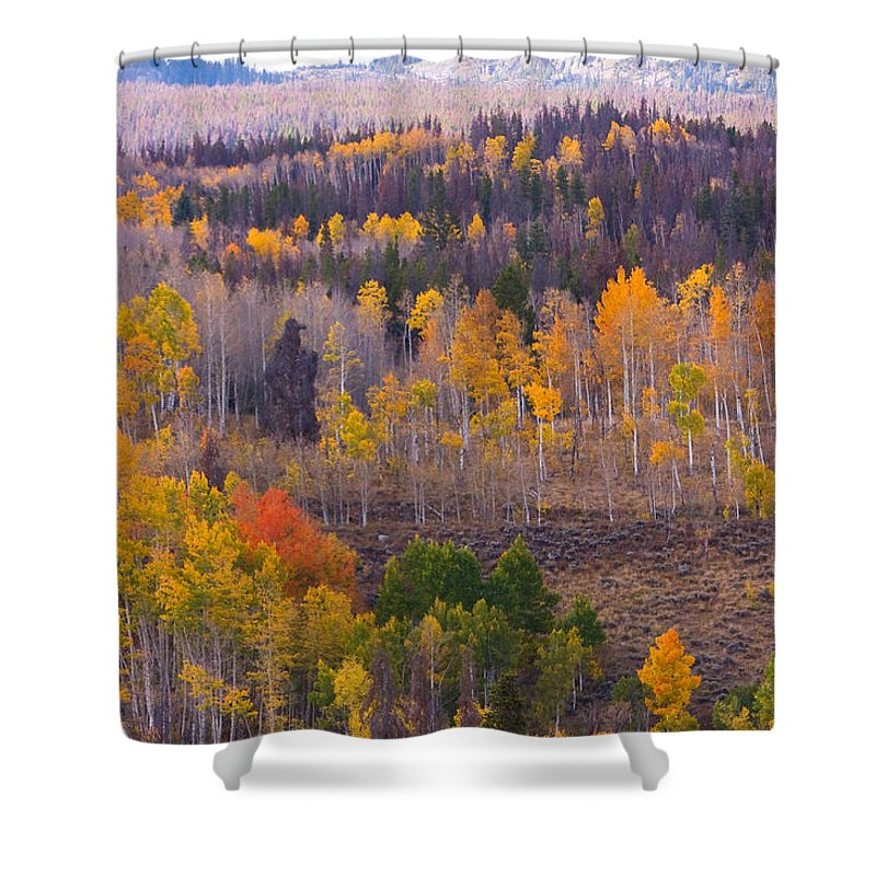 Trees Shower Curtain featuring the photograph Rocky Mountain Autumn View by James BO Insogna