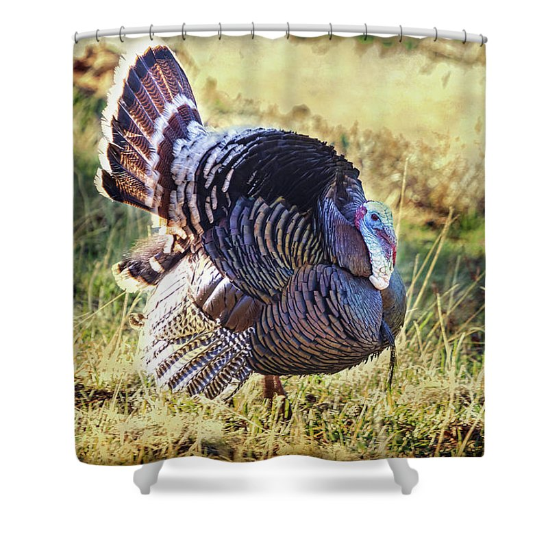 Turkey Shower Curtain Featuring The Photograph Rocky Mountain Wild By James BO Insogna