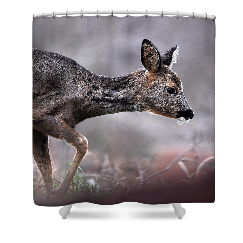 Roe Deer Shower Curtain featuring the photograph Roe Deer by Gavin Macrae