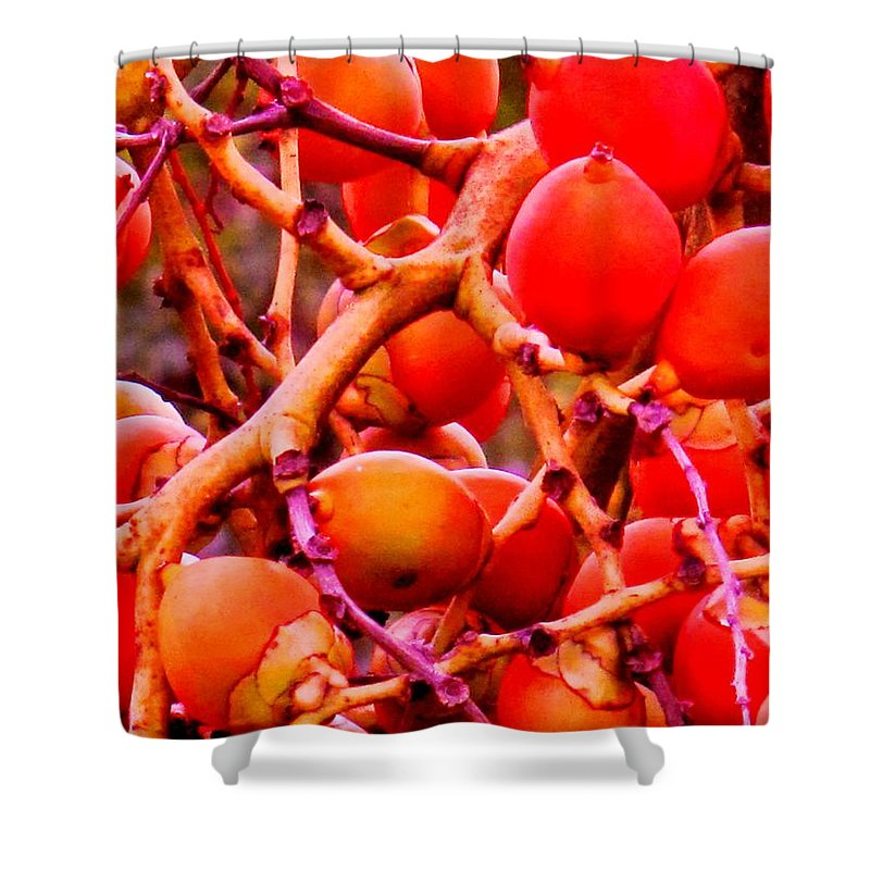 Red Shower Curtain featuring the photograph Romney Red by Ian MacDonald
