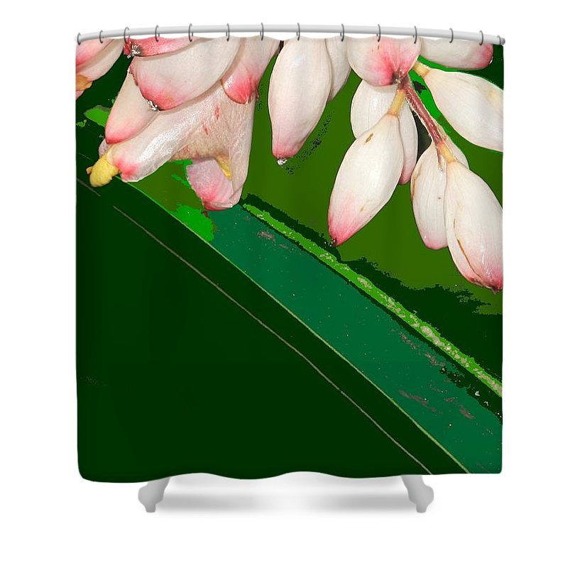 Flowers Shower Curtain featuring the photograph Romney White by Ian MacDonald