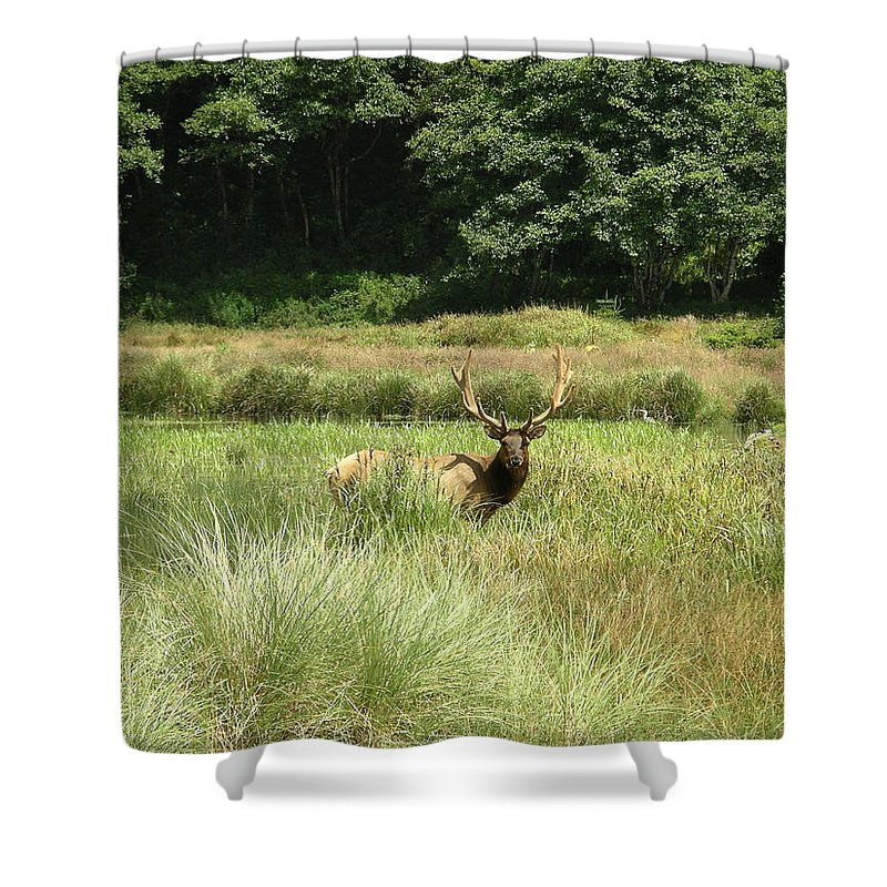 California Shower Curtain featuring the photograph Roosevelt Elk 2 by Rich Bodane