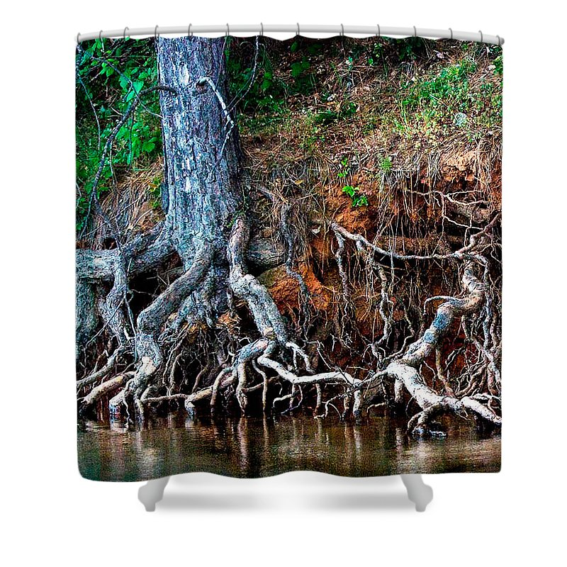 California Nature Shower Curtain featuring the photograph Rooting Section by Norman Andrus