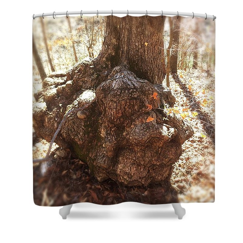 Tree Root Shower Curtain featuring the photograph Roots by Melissa Howell