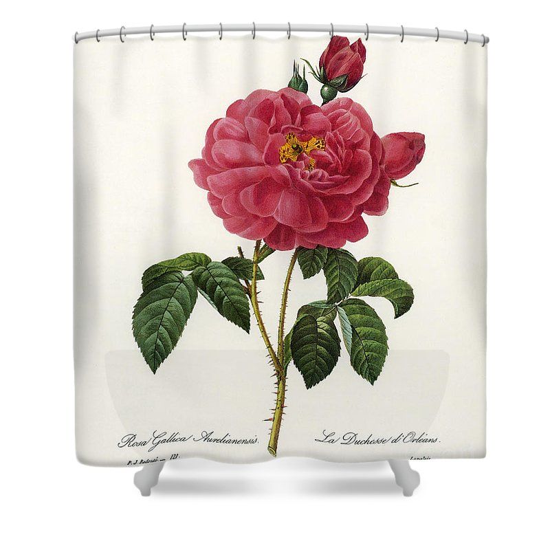 1833 Shower Curtain featuring the photograph Rosa Gallica by Granger