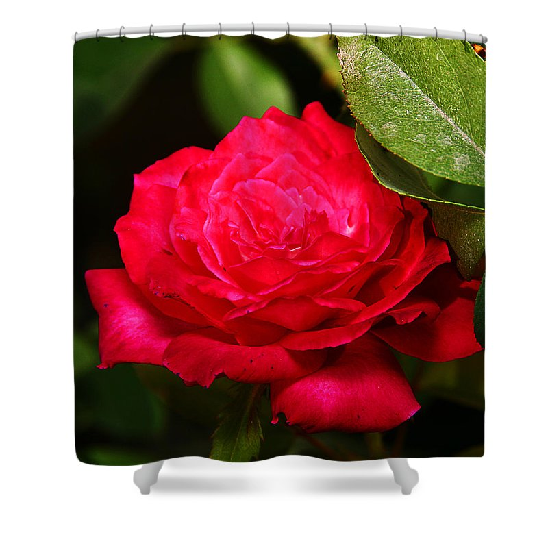 Flower Shower Curtain featuring the photograph Rose by Anthony Jones