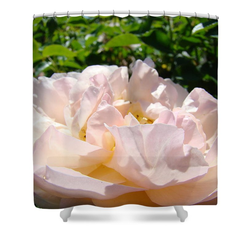Rose Shower Curtain featuring the photograph Rose Art Prints Canvas Sunlit Pink Rose Garden Baslee Troutman by Baslee Troutman