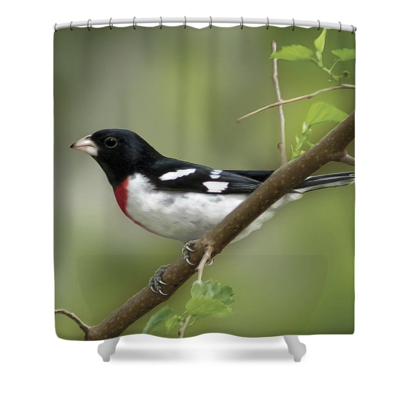 Nature Shower Curtain featuring the digital art Rose Breasted Grosbeak by Barbara Hymer