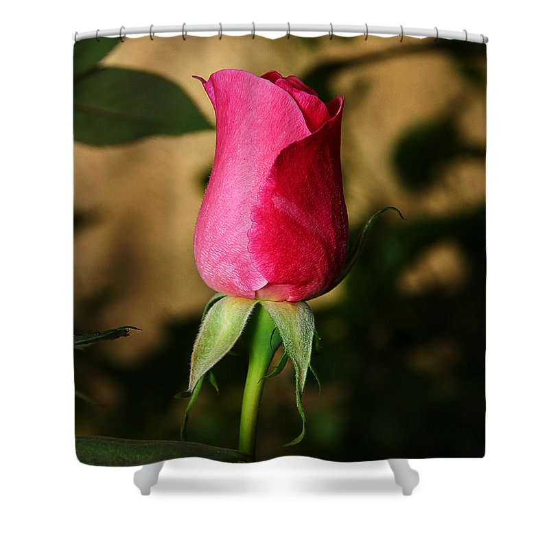 Rose Shower Curtain featuring the photograph Rose Bud by Anthony Jones