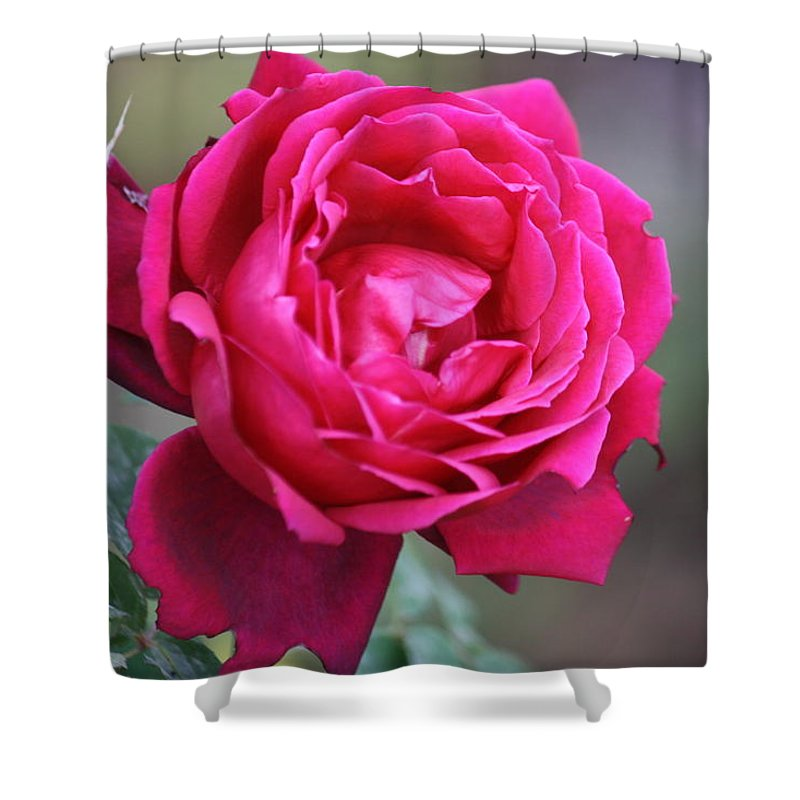Floral Shower Curtain featuring the photograph Rose by Donna Walsh