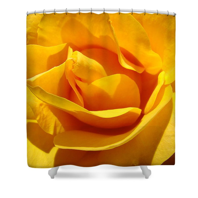 Rose Shower Curtain featuring the photograph Rose Flower Orange Yellow Roses 1 Golden Sunlit Rose Baslee Troutman by Baslee Troutman