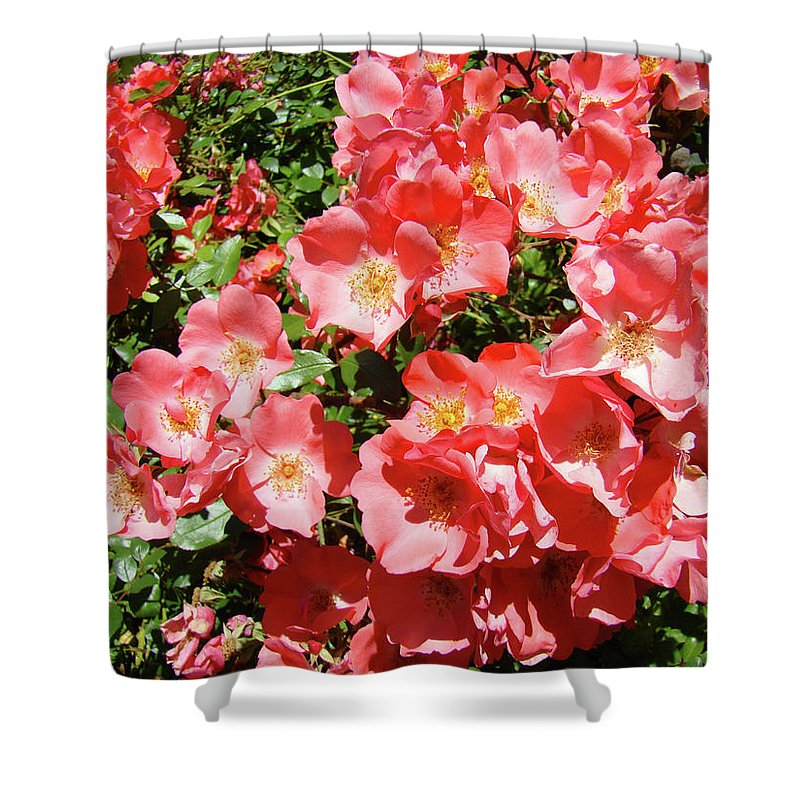 Rose Shower Curtain featuring the photograph Rose Garden Pink Roses Botanical Landscape Baslee Troutman by Baslee Troutman