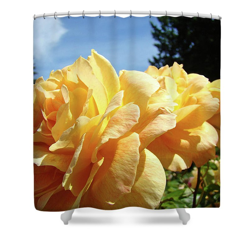 Rose Shower Curtain featuring the photograph Rose Garden Yellow Peach Orange Roses Flowers 3 Botanical Art Baslee Troutman by Baslee Troutman