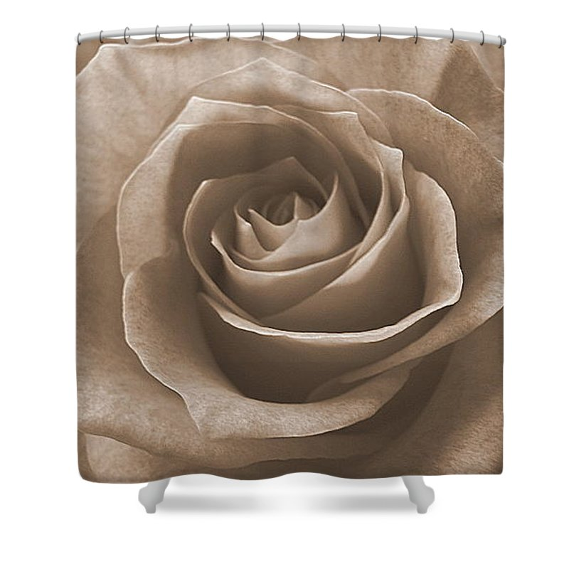 Rose Sepia Pedals Shower Curtain featuring the photograph Rose In Sepia by Luciana Seymour