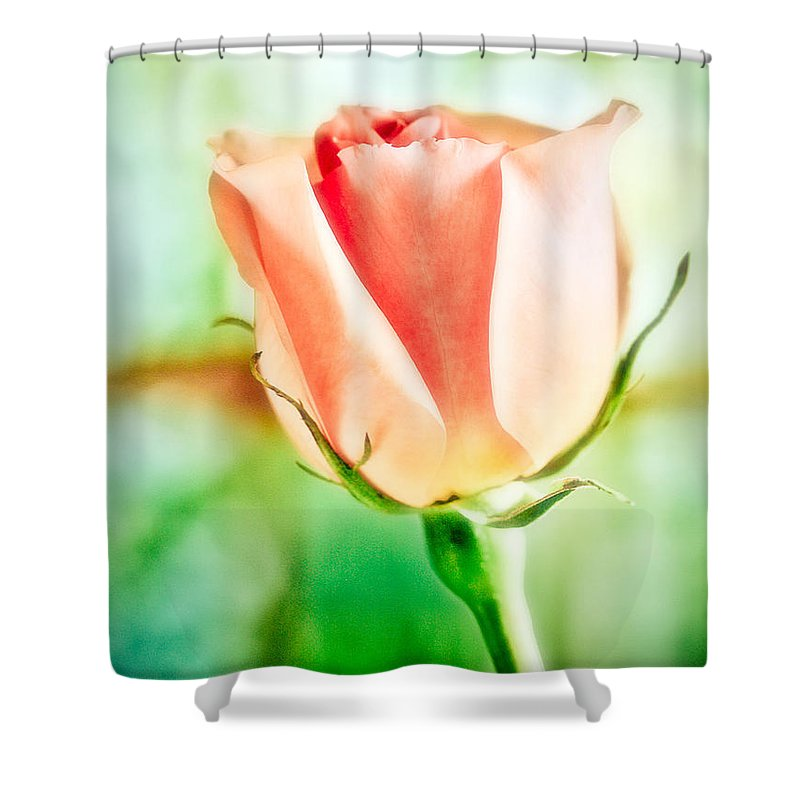 Rose Shower Curtain featuring the photograph Rose In Window by Marilyn Hunt