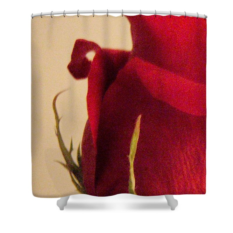 Rose Shower Curtain featuring the photograph Rose by Kristine Nora