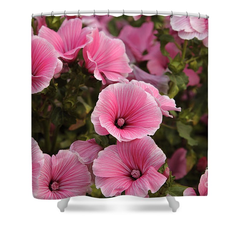 New England Shower Curtain featuring the photograph Rose Mallow Flowers by Erin Paul Donovan