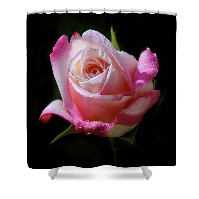 Rose Shower Curtain featuring the photograph Rose Photo by Joyce Sherwin