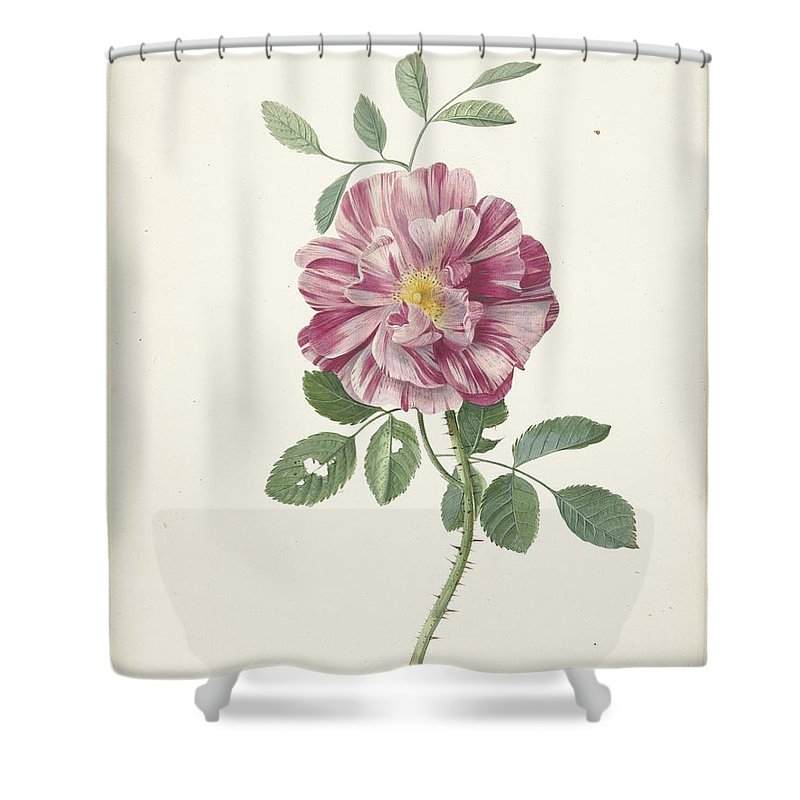 Rose Shower Curtain featuring the painting Rose by MotionAge Designs