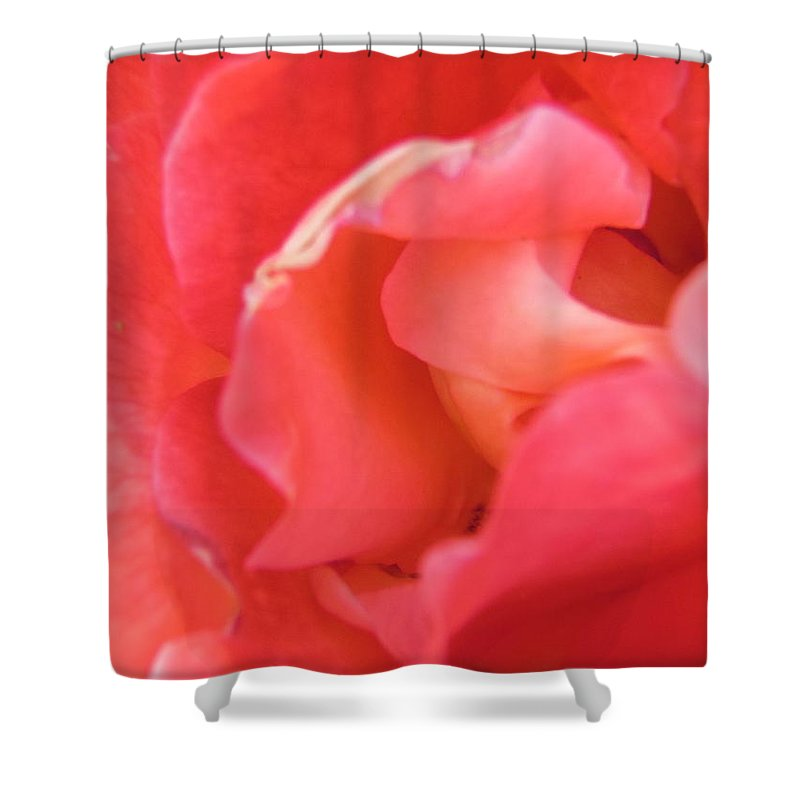 Flower. Petals Shower Curtain featuring the photograph Rose by Stephanie Moore