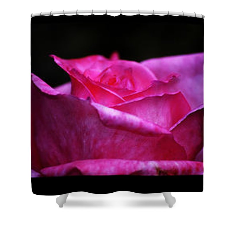 Clay Shower Curtain featuring the photograph Rose Tryptich by Clayton Bruster