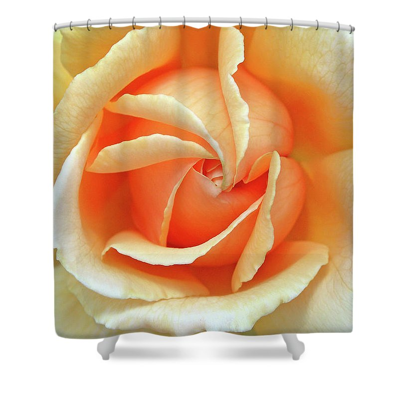 Flower Photos Shower Curtain featuring the photograph Rose Unfolding by Maria Ollman