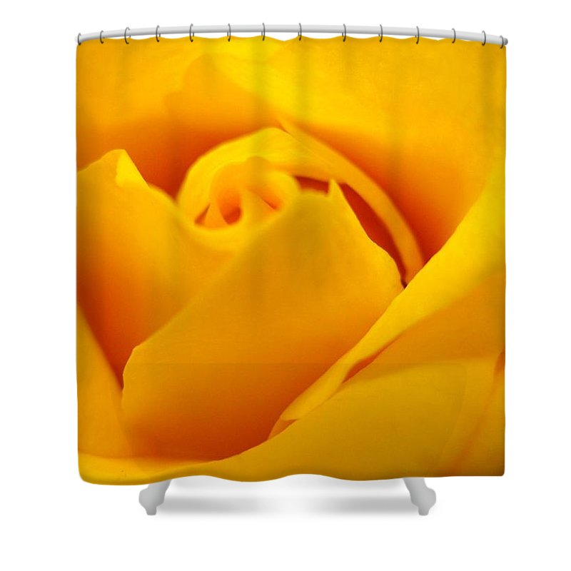 Rose Shower Curtain featuring the photograph Rose Yellow by Rhonda Barrett