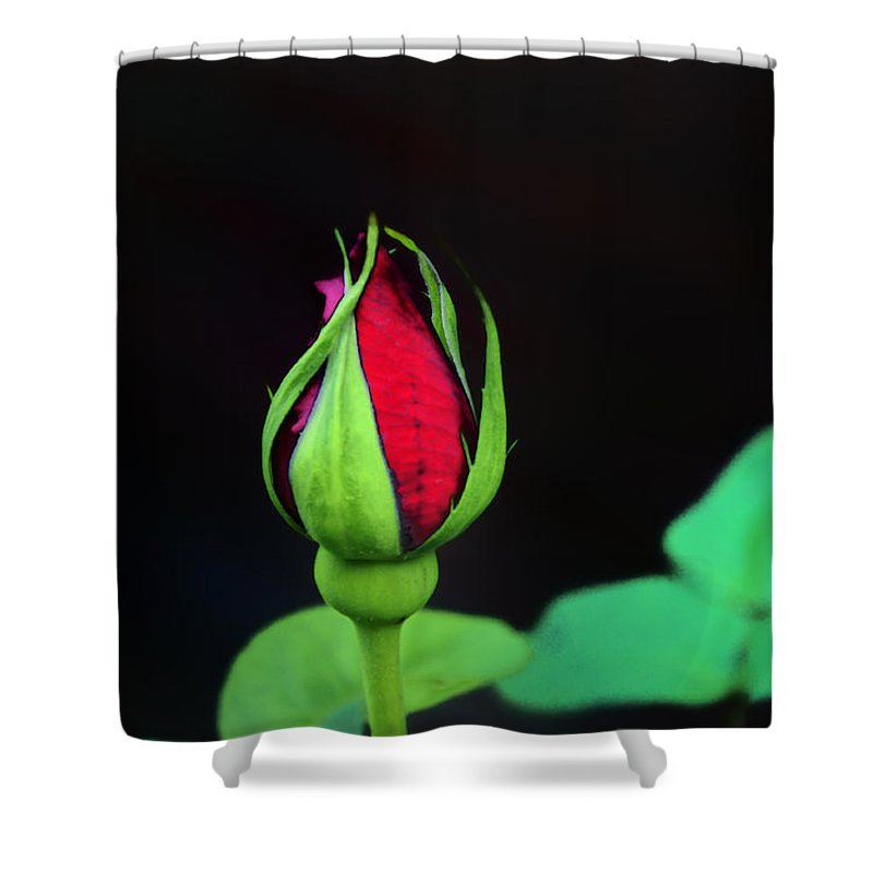 Rose Shower Curtain featuring the photograph Rosebud by Bill Cannon
