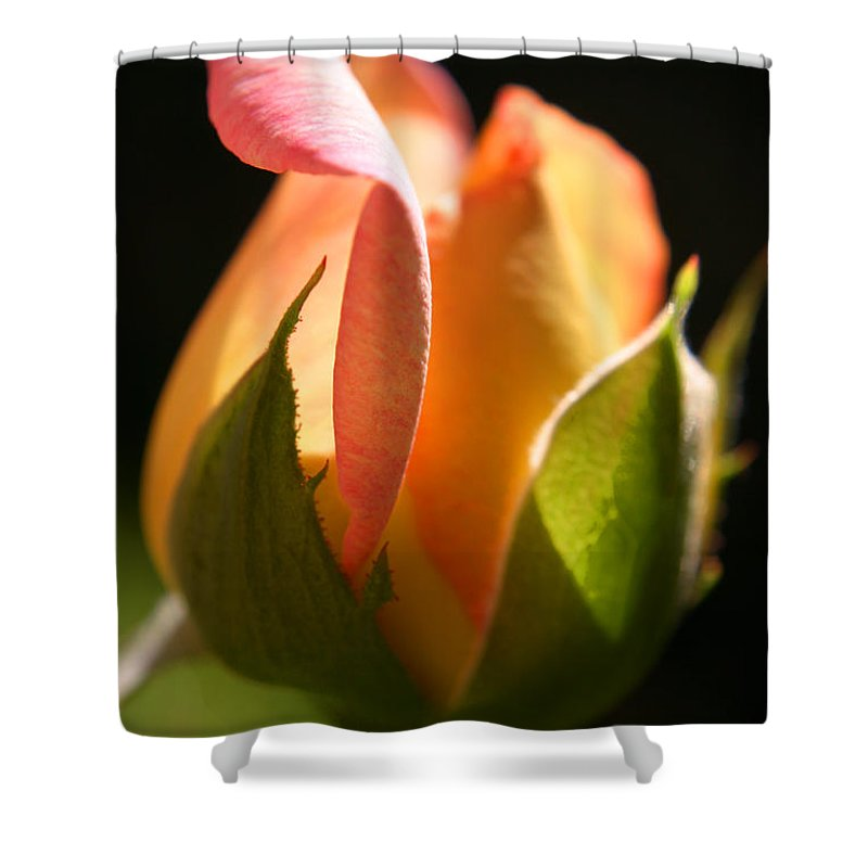 Rosebud Shower Curtain featuring the photograph Rosebud by Ralph A Ledergerber-Photography