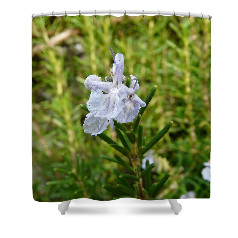 Rosemary Shower Curtain featuring the photograph Rosemary Bloom by Valerie Ornstein