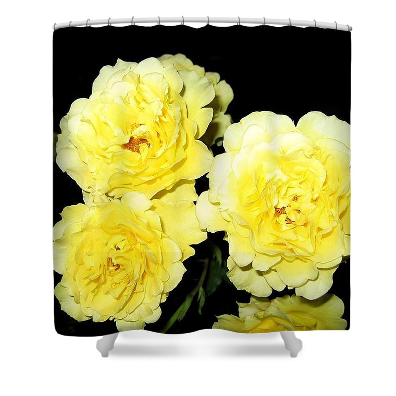 Roses Shower Curtain featuring the photograph Roses 11 by Will Borden