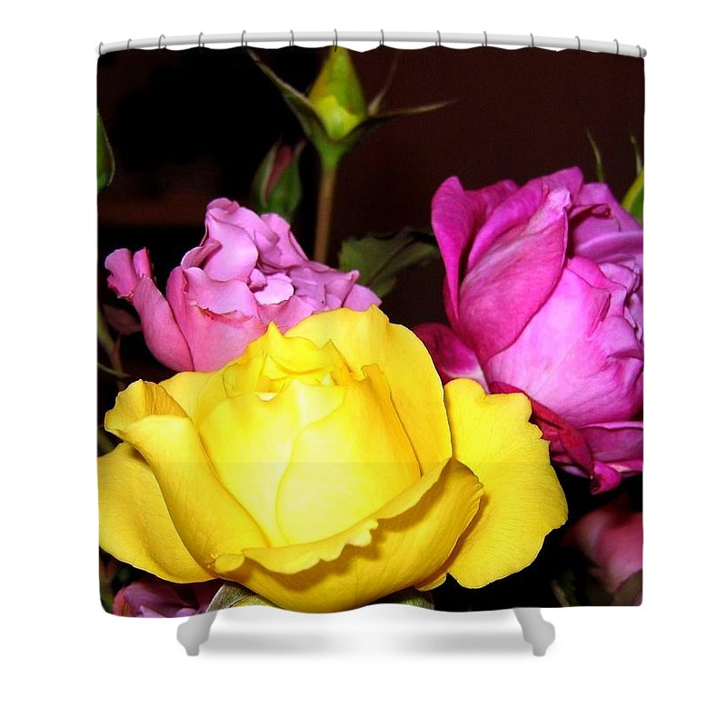 Roses Shower Curtain featuring the photograph Roses 4 by Will Borden
