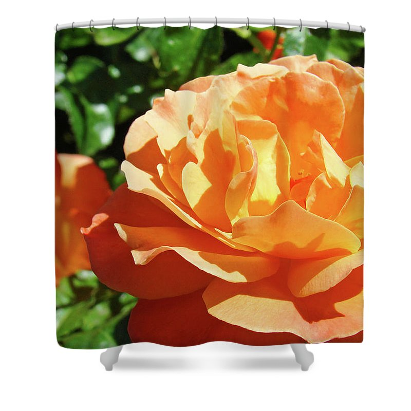 Rose Shower Curtain featuring the photograph Roses Art Prints Orange Rose Flower 11 Giclee Prints Baslee Troutman by Baslee Troutman